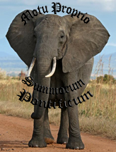Summorum Pontificum the Elephant in the Room that no one is talking About